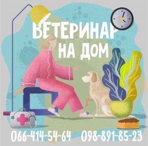 Ветеринар на дом в Харькове - изображение 1