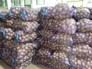 Картофель оптом от 5 р! - изображение 1