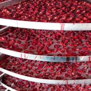 Конвективная сушка овощей, фруктов, ягод - изображение 1