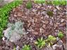 Кора дуба, мульча разных фракций - изображение 3