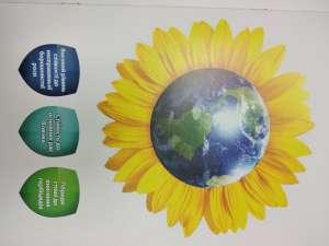 Купити насіння соняшнику Сирена МС. - изображение 1