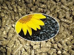 Купитьшрот подсолнечный, зерновые, муку. Украина - изображение 1