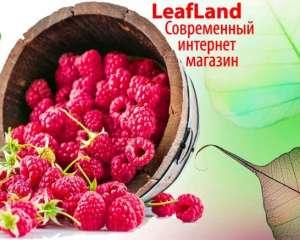 Купить саженцы почтой от магазина Leafland - изображение 1