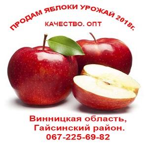 Купить яблоки урожая 2018 опт, свежие Украина - изображение 1