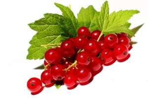 Куплю ягоди смородини і порічки, закупка смородини гуртом - изображение 1