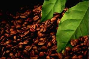 Масляный экстракт черного кофе - изображение 1