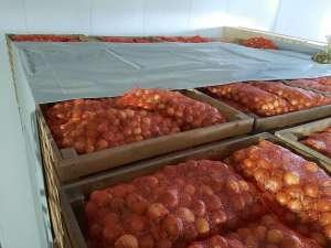 Морковь, капуста, лук, свекла продам оптом в Тернополе - изображение 1