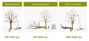 Обрезка деревьев в Харькове - изображение 1
