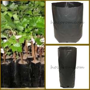 Пакеты для саженцев Выращивание хвойных растений Выращивание растений - изображение 1