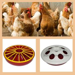 Поилка для цыплят и другие виды поилок для птицы - изображение 1