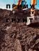 Перейти к объявлению: Приму грунт, землю на подсыпку (благоустройства) Гостомель
