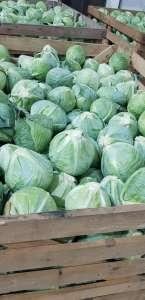 Продам овощи оптом. Капуста недорого опт. - изображение 1