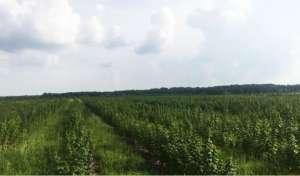 Продаємо органічну ягідну ферму - изображение 1
