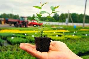 """Средства для защиты растений от магазина""""B&S Product"""" - изображение 1"""
