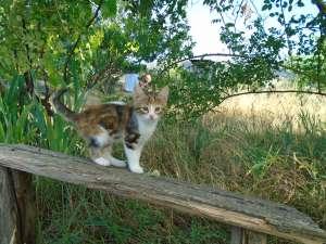 Трехцветные мраморные кошечки и рыжие котики от кошки-крысолова - изображение 1