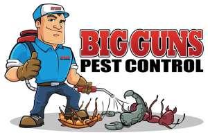 Уничтожение клопов, тараканов, муравьев в Орле - изображение 1